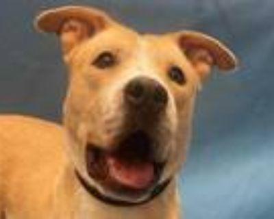 Adopt Doris a Tan/Yellow/Fawn Labrador Retriever / Mixed dog in Woodbury