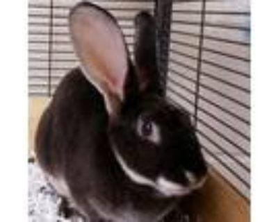 Adopt Magic a Bunny Rabbit