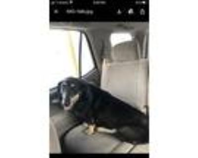 Adopt Derrick a Black - with Tan, Yellow or Fawn Basset Hound / Mixed dog in