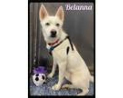 Adopt Belanna - 2103045 / 2021 a Siberian Husky