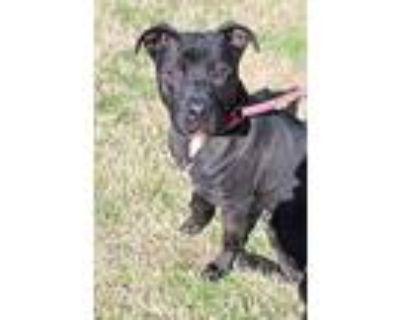 Biggie, Terrier (unknown Type, Medium) For Adoption In Abbeville, Louisiana