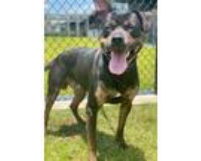 Adopt 94766 a Terrier, Hound