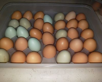 Organic Backyard Eggs