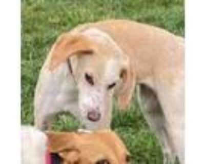 Adopt Elaine a Hound, Mixed Breed