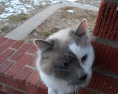 1/2 way tame Barn Kitties