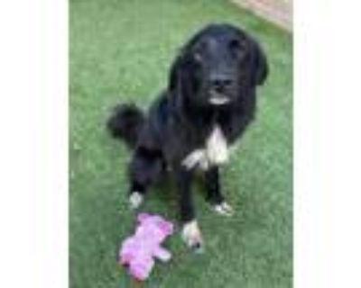 Adopt Vader - VIP a Black Border Collie / Mixed dog in Arlington, TX (31378632)