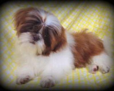 Pet Grooming All types & Styles Located in Abilene KS