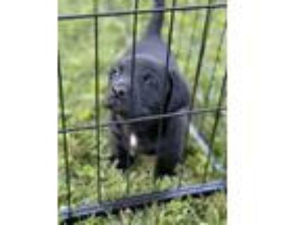 Adopt Squid a Border Terrier, Dachshund
