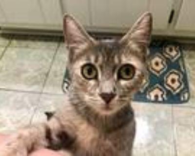 Frida, Domestic Shorthair For Adoption In Dallas, Georgia