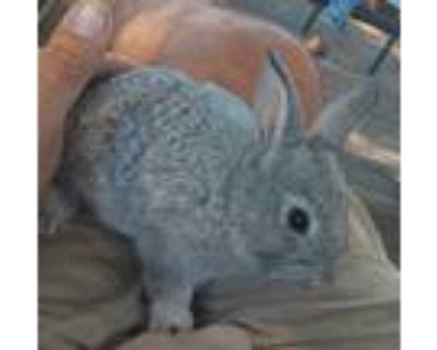 New zealand rabbits, bucks n does
