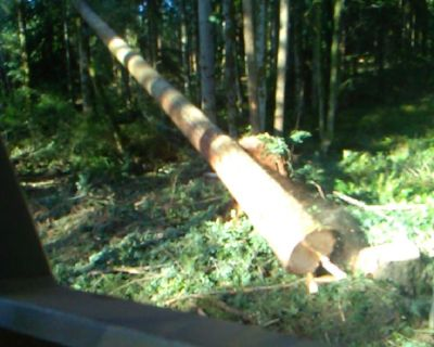 🌲AMERICAN FOREST LANDS Washington Logging Company 🔴TImber Buyers Pacific NW
