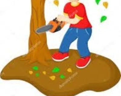 🌂😁 TREE SERVICE TREE REMOVAL TREE SERVICES 678-558-8258