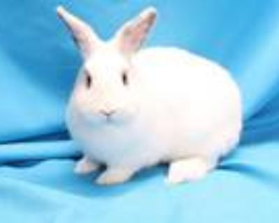 Adopt PENNE a Bunny Rabbit