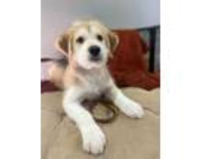 Adopt Neils Bohr a Husky, Poodle