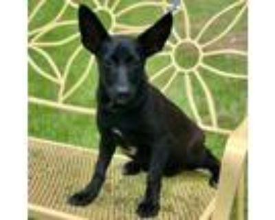 Umi, Terrier (unknown Type, Small) For Adoption In New Iberia, Louisiana