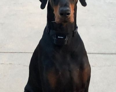 4 year old Doberman male.I want to find large range for his running. He's not socially good with oth
