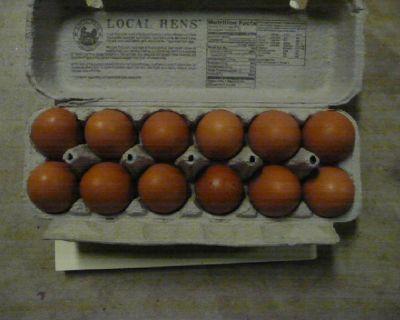 Fresh Yard Eggs