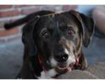 Adopt Eloa & Jackie a Labrador Retriever / Basset Hound / Mixed dog in Santa
