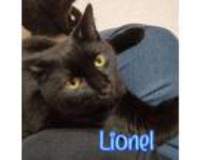 Adopt Lionel a Domestic Shorthair / Mixed (short coat) cat in Port Clinton
