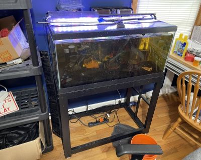 40 gallon tank with Red belly piranha
