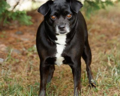 Blackie P 11397 - Mixed Breed (Small) - Adult Female