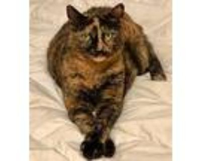 Mika, Domestic Shorthair For Adoption In Cambria, California