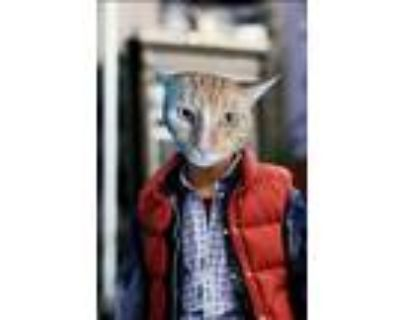 Adopt Marty McFly a Domestic Short Hair