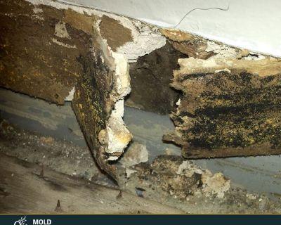 Mold inspection services in Alexandria, VA