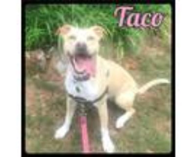 Adopt Taco - Foster / 2021 a Terrier