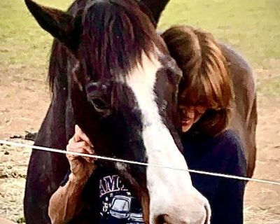 Active horse owner and artist looking for a room