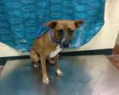 Adopt Dog a Terrier, Mixed Breed