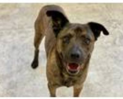 Adopt WONTON a Brindle Plott Hound / Chow Chow / Mixed dog in Norfolk