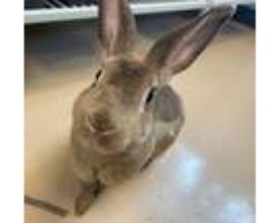Adopt Bet a Bunny Rabbit
