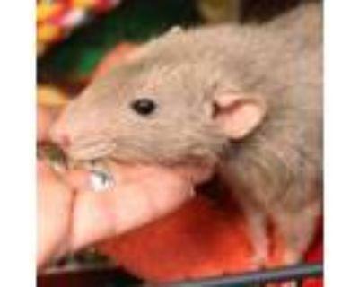 Adopt Attenborough pp w/ his brothers a Rat