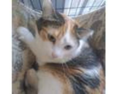 Adopt Jasmine a Calico or Dilute Calico Domestic Shorthair / Mixed cat in Hemet