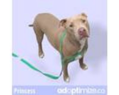 Adopt PRINCESS a Brown/Chocolate American Pit Bull Terrier / Mixed dog in