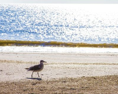 Ocean View Villa ~ Fenced Yard ~ Pet Friendly ~ Steps to the Beach!!! - St. Augustine Beach