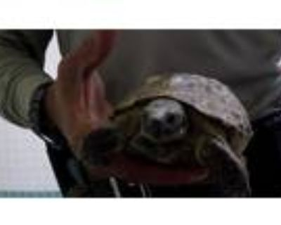 Adopt a Tortoise / Mixed reptile, amphibian, and/or fish in Pasadena