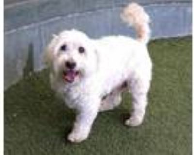 Adopt WILLIE a White Mixed Breed (Medium) / Mixed dog in Van Nuys, CA (31606783)