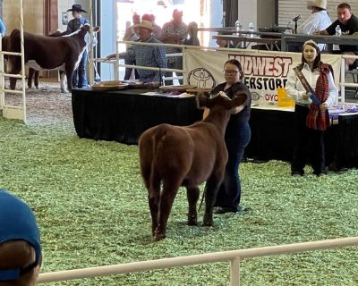 Breaking Show cattle to lead