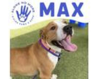 Adopt Max a Tan/Yellow/Fawn American Pit Bull Terrier / Mixed dog in Phoenix