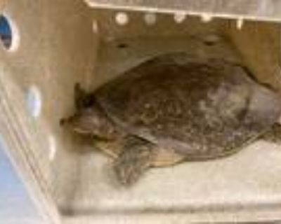 Adopt a Turtle - Other / Mixed reptile, amphibian, and/or fish in Baldwin Park