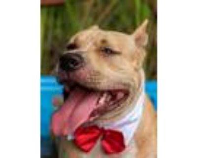 Adopt Bully a Terrier