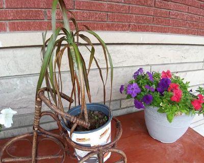 Petunias n palm tree