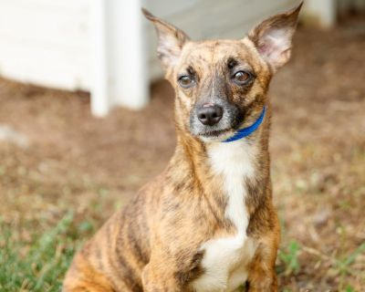 Arleen P 11362 - Mixed Breed (Small) - Adult Female