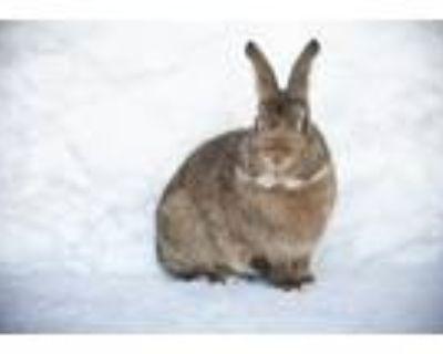 Adopt Cinnabun I a Bunny Rabbit