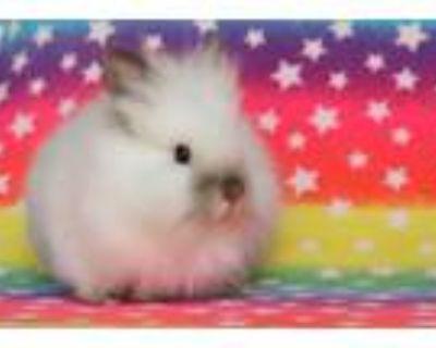 Adopt Boo a Bunny Rabbit