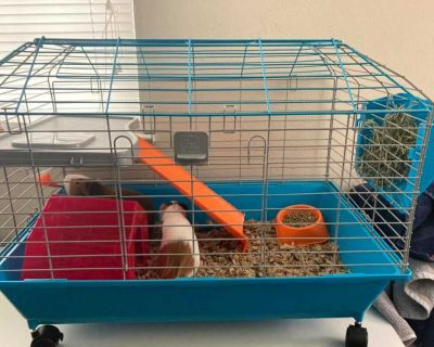 Guinea Pig Cage - Bought 2 weeks ago!