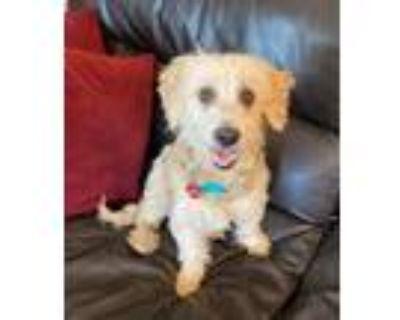 Adopt Valero a Terrier