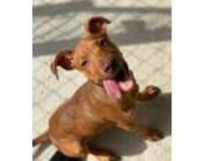 Adopt Leiomy a Terrier